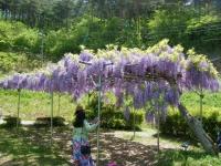 花と泉の公園・牡丹園004