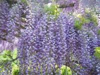 花と泉の公園・牡丹園005