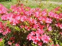 花と泉の公園・牡丹園006