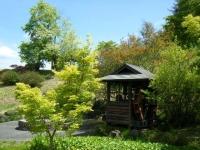 花と泉の公園・牡丹園008