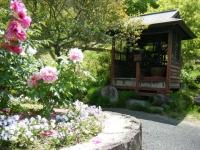 花と泉の公園・牡丹園009