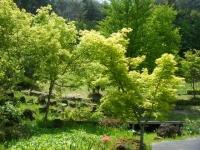 花と泉の公園・牡丹園010