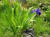 花と泉の公園・牡丹園013