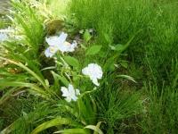 花と泉の公園・牡丹園014