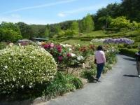 花と泉の公園・牡丹園017