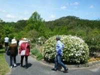 花と泉の公園・牡丹園019