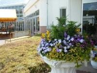 2019-05-18花と泉の公園ベゴニア館004