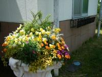 2019-05-18花と泉の公園ベゴニア館005