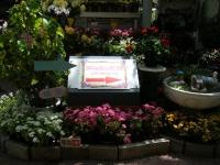 2019-05-18花と泉の公園ベゴニア館016
