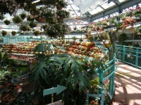 2019-05-18花と泉の公園ベゴニア館018