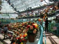 2019-05-18花と泉の公園ベゴニア館022