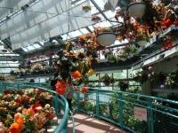 2019-05-18花と泉の公園ベゴニア館023