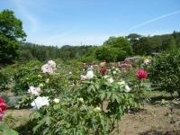 花と泉の公園・牡丹園025