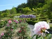 花と泉の公園・牡丹園026