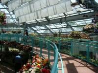 2019-05-18花と泉の公園ベゴニア館026