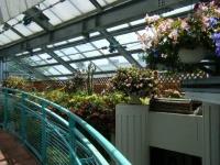 2019-05-18花と泉の公園ベゴニア館027
