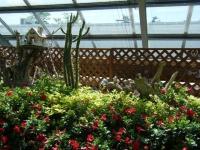 2019-05-18花と泉の公園ベゴニア館028