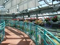 2019-05-18花と泉の公園ベゴニア館031