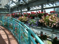 2019-05-18花と泉の公園ベゴニア館033