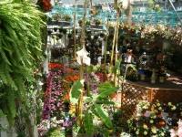 2019-05-18花と泉の公園ベゴニア館036