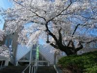 2019-04-20一関市役所千厩支所109