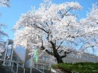 2019-04-20一関市役所千厩支所111