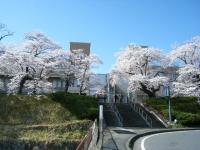 2019-04-20一関市役所千厩支所113