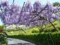 花と泉の公園・牡丹園040