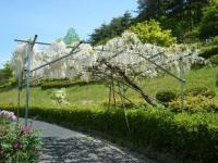 花と泉の公園・牡丹園044