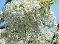 花と泉の公園・牡丹園045