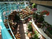 2019-05-18花と泉の公園ベゴニア館037