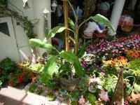 2019-05-18花と泉の公園ベゴニア館039