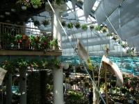 2019-05-18花と泉の公園ベゴニア館042