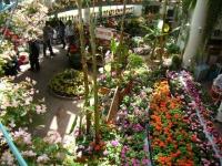 2019-05-18花と泉の公園ベゴニア館046
