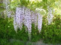 花と泉の公園・牡丹園054