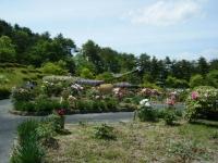 花と泉の公園・牡丹園058