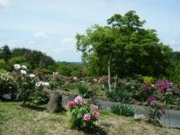 花と泉の公園・牡丹園059