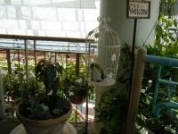 2019-05-18花と泉の公園ベゴニア館056