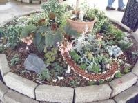 2019-05-18花と泉の公園ベゴニア館058