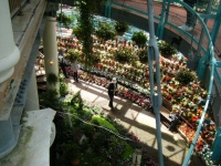 2019-05-18花と泉の公園ベゴニア館051
