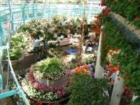 2019-05-18花と泉の公園ベゴニア館052