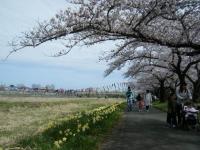2019-04-21北上展勝地121