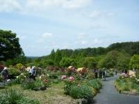 花と泉の公園・牡丹園065
