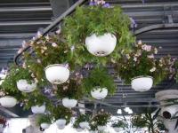 2019-05-18花と泉の公園ベゴニア館063