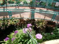 2019-05-18花と泉の公園ベゴニア館069