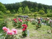 花と泉の公園・牡丹園080