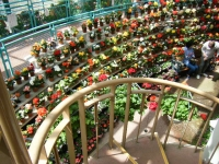 2019-05-18花と泉の公園ベゴニア館074