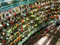 2019-05-18花と泉の公園ベゴニア館075