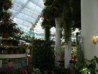 2019-05-18花と泉の公園ベゴニア館081