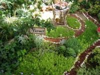 2019-05-18花と泉の公園ベゴニア館084